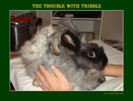 The Trouble with Tribble by dragonpyper