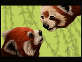 Weekly Project 3 Red Pandas by Rath-Roiben-Rye