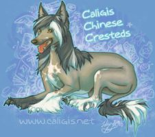 FP Header - chinese crested by caligis
