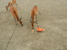 Stupidfox contest 3 Nara Park by Delicate-Wings