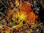 Butterly in the night by cdka