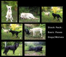 Pack: dog or wolf basic poses by ElifSiebenpfeiffer