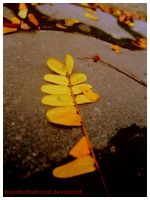 Yellow Leaves. by breathofbetrayal