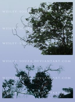 Trees with Branches PNG Stock by Wesley-Souza