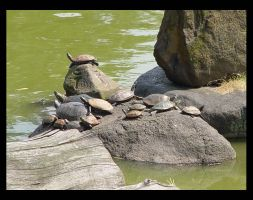 Sunbathing Turtles by prismkitty