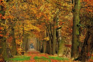Walking along just another autumnal path by jchanders