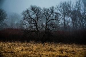 In Front of the Fog- Color by emspanglerphotos