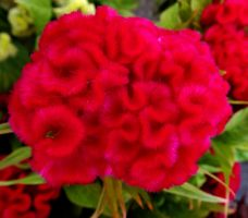 Farmer's Market Bouquets by Tails-155