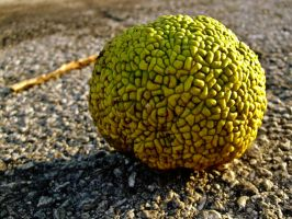 Hedge Apple by Baq-Stock