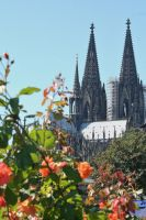 look through roses cologne dome 3 by ingeline-art