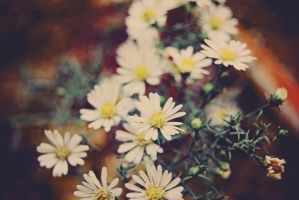 Daisies by almostkilledme