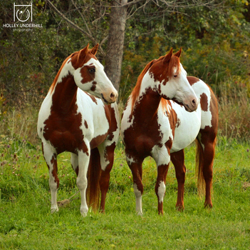 Seeing Double. by ThunderhillPaints