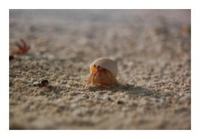 Little crab by LukasB86