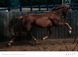 horse5_copabella by axis85stock