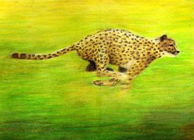 Running Cheetah by heatherbunny