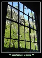 sanatorium window by mp-shaper