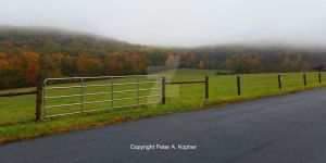 Foliage, Farm and Fog by peterkopher
