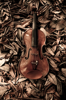 the violin by tinilla