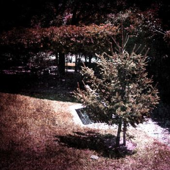 SolitaryPine by AnaViegas
