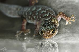 Gecko Reflection by Trezizi