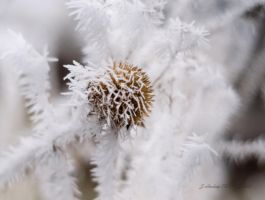 WinterSong by Corvidae65