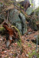 Stones in the wood by Hudojnica