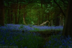 the lost forest by photo-earth