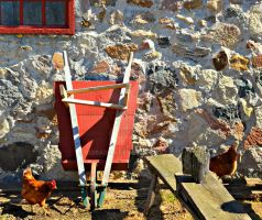Wheelbarrow and Chickens by BigBadMatt