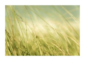 Typical Closeup of Grass I by Andross01