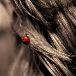 bug in your hair redux by foodshelf