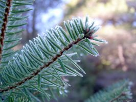 Iced Nature Fir Tree by nitro912gr