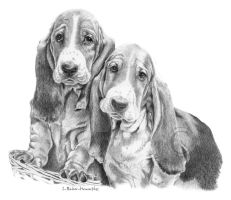 Bassets in a basket by sallyspades