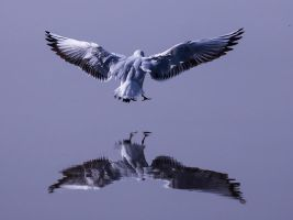 Glass Landing by InayatShah
