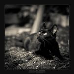 Momo The Black Cat by IzabelaMilczarek