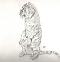 Tiger sketch by Killslay-steelclaw