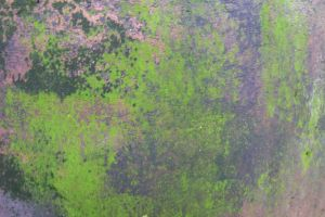 Bright green mossy texture mix by paintresseye