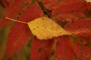 leaves by Woolpix