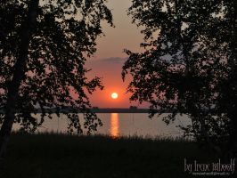Sunset Between the Trees by Astronya