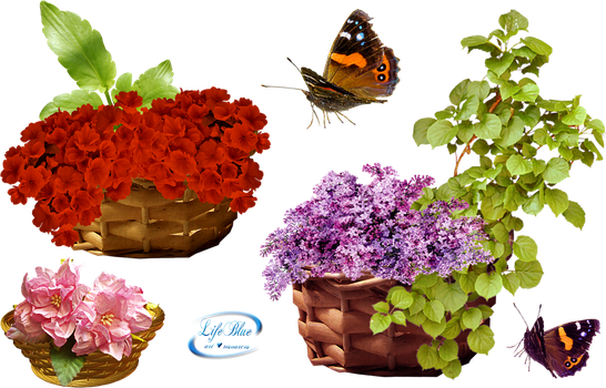 Baskets with flowers - PNG by lifeblue