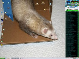 Ferret Desktop by smoochyscoop