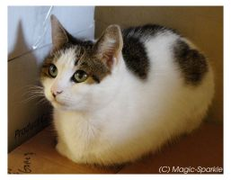 Cat Loaf by StudiousOctopus