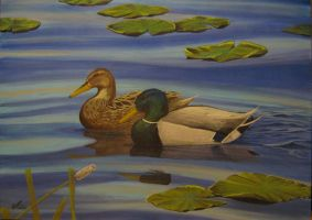 'Mallards duck pair' by tatopainting