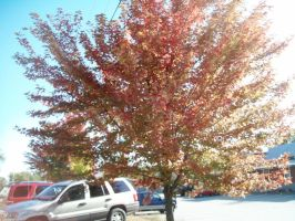 Tree With Red Leaves by DerpyDash64