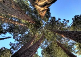 Sequoia family HDR by wavespell