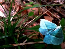the blue beauty in the forest by Aeliquia