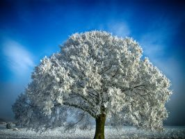 Dream Of Winter by Life-For-Sale