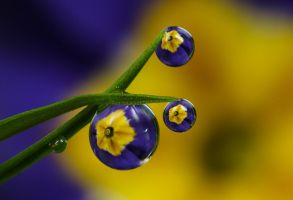 Dew Drop Refractions 9 by Alliec