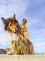 Hi from Lassie by hermio