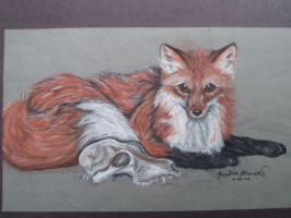 the fox by supercrazzy