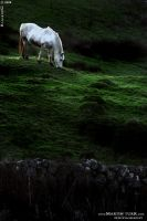 Ireland 09 by BlackdoG-MT